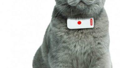 Bien acheter un gps pour chat visuel 3