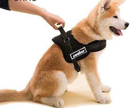 Quel est le meilleur harnais pour chien visuel 3