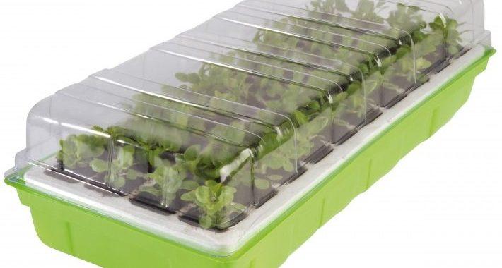 Quel est le meilleur kit de germination visuel 3