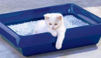 quelle est la meilleure litière pour chat visuel 3